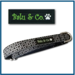 Brand Dog Collar with PVC Label